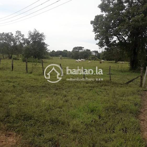 residential Land/Development for sale in ບ້ານ ໜອງຍາວ ID 2722 1