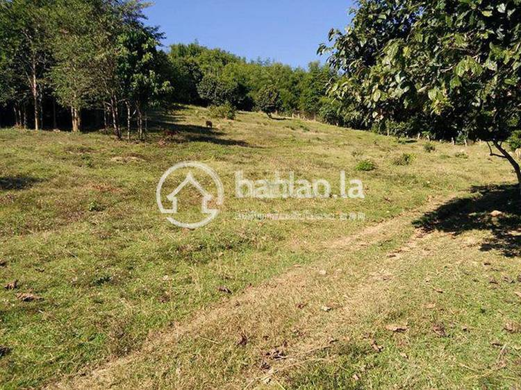 residential Land/Development for sale in ກ້ວຍ ID 3080 1