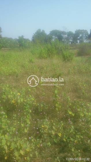 residential Land/Development for sale in ໂຊກໃຫ່ຍ ID 3527 1