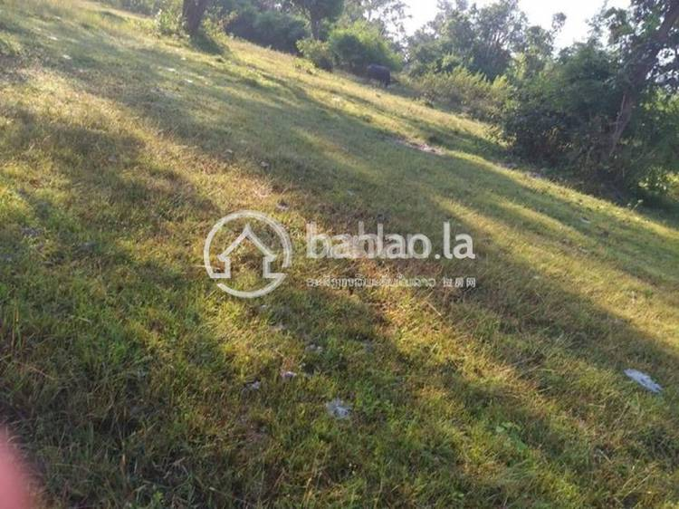 commercial Land/Development for sale in ບໍເຫຼັກ ID 4652 1