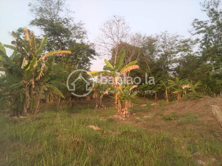 commercial Land/Development for sale in ດົງໂພສີ ID 7145 1